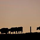 Sunrise Cows - NZ by AndreaEL