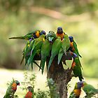 Rainbow Lorikeets by SusanAdey