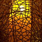Light Caged in Bamboo by ElyseFradkin
