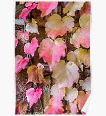 Autumn Leaves - Uralla NSW Australia Poster