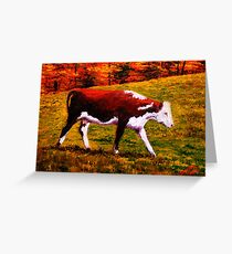 Cow in the Autumn Pasture Greeting Card