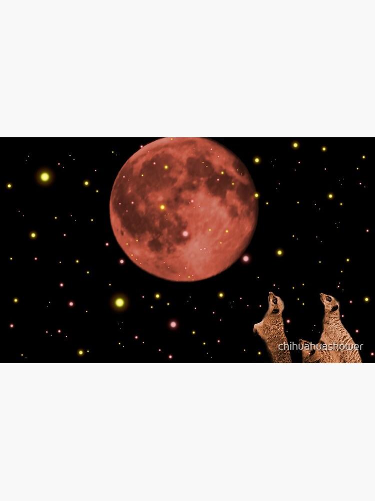 Coral meerkat moon by chihuahuashower