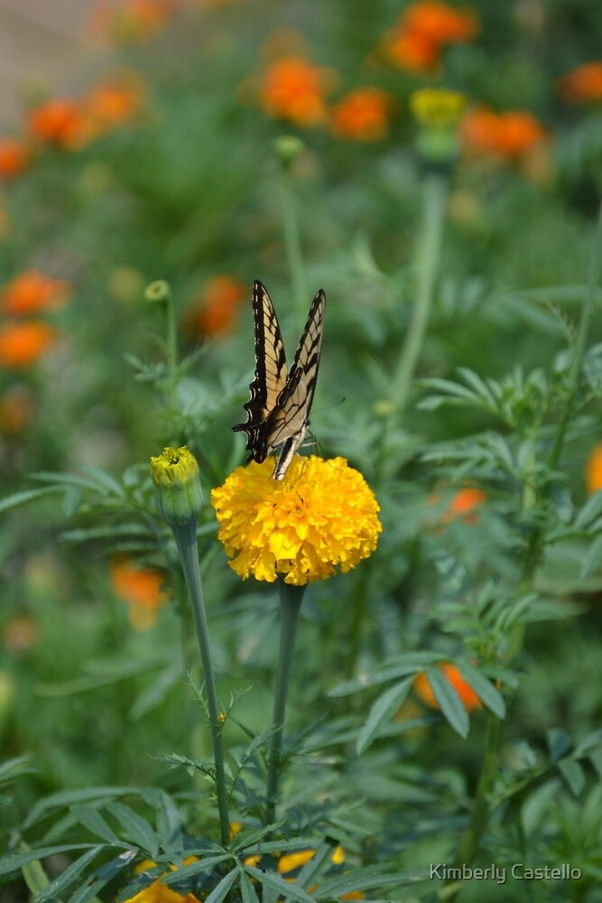 Flower and Butterfly by Kimberly Castello
