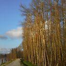 River walk 2 by MaluC
