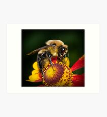 Honey Bee Art Print