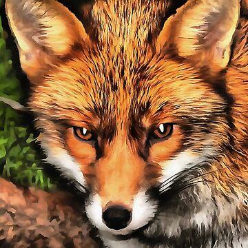 Red Fox  by taiche