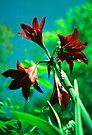 rosey cross by Juilee  Pryor