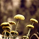 Vintage Pasture by ElocinMuse