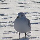 Snow Bird by Stacy Colean