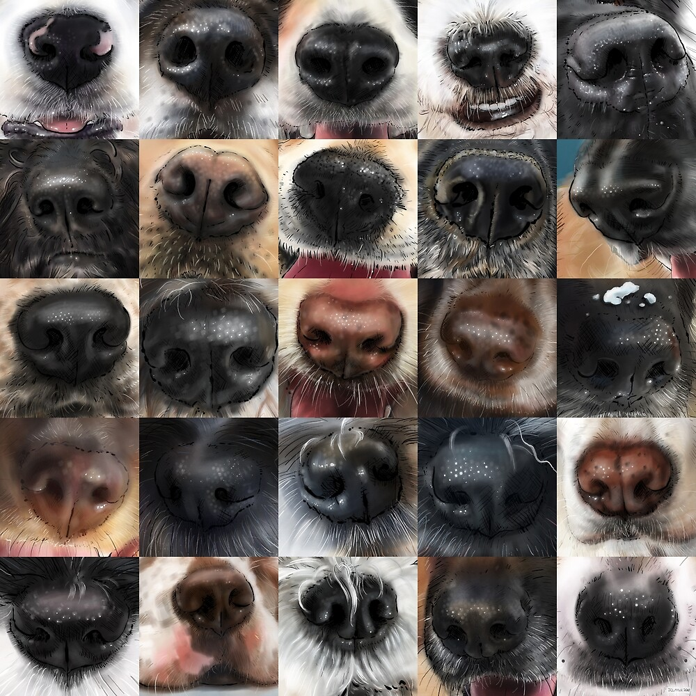 Dog Noses For Dog Lovers by JC Little