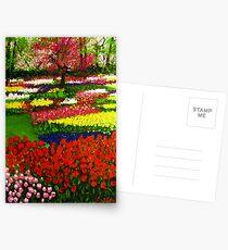 Spectacular Netherlands Tulips Garden Postcards