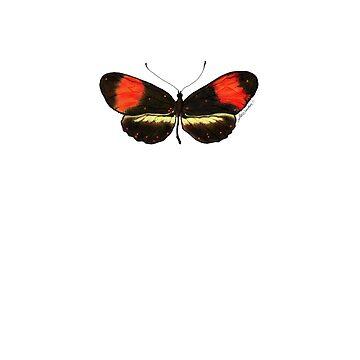 Orange & Black Butterfly by srwdesign