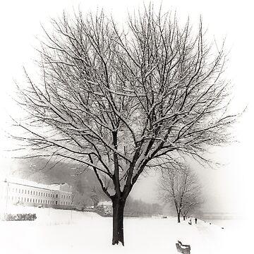 Winter Trees along the Danube at Ybbs by MenegaSabidussi