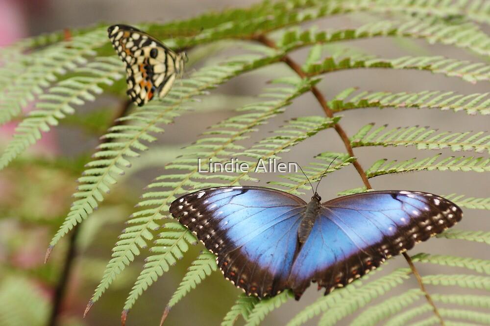 Blue Butterfly by Lindie Allen