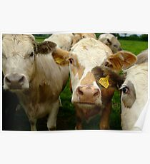 Cows in the hood Poster
