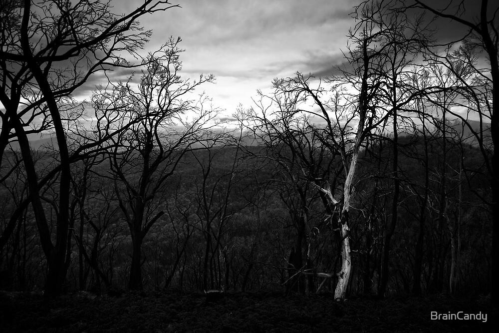 Marysville - Forest by BrainCandy