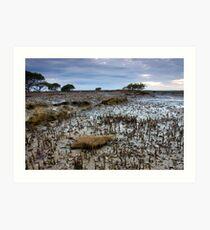 Amongst The Mangroves Art Print