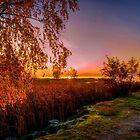 October Morning 18 by Veikko  Suikkanen