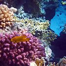 Mysterious Red Sea World 5 by hurmerinta
