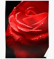 Rose Red. Poster