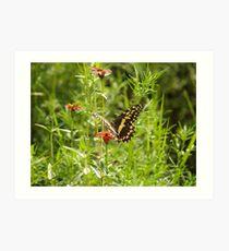 Butterfly and Grasshopper Art Print
