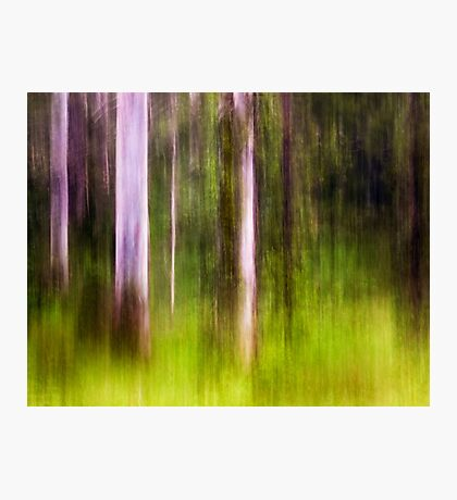 Mitchell Park ~ an impressionist's view III Photographic Print