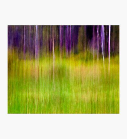 Mitchell Park ~ the impressionist's view I Photographic Print