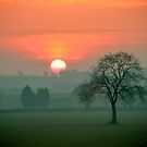 """'Greetings', said the Sun"" by Bradley Shawn  Rabon"