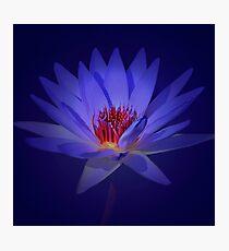Purple Lily Photographic Print