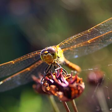 Golden Wings of A Dragonfly by Jokus