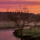 Lone Tree At Winters Sunrise by widdy170