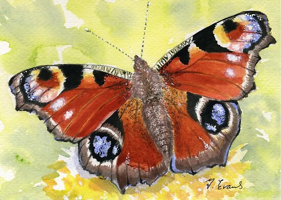 Peacock Butterfly by FranEvans