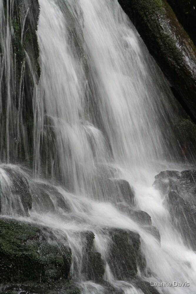 Lilydale Falls - Tasmania by Leanne Davis