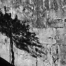Shadow - San Gimignano, Tuscany, Italy by newbeltane