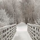 A Frosty Morning by lorilee