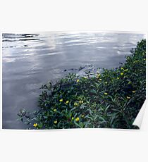 Calming Waters Poster