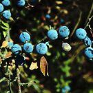 Blue Berries by newbeltane