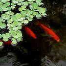 Red Fish Green Water Weed by edesigned