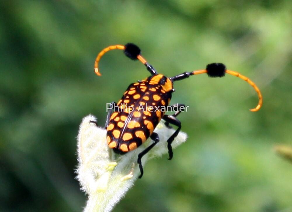 Unusual bug by Philip Alexander
