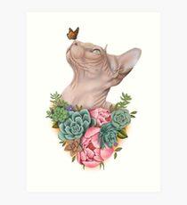Sphynx-Katzen-Kunst-Geschenke Kunstdruck
