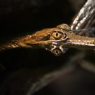Crocodile Lookin At You by Derek Kan