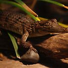 Crocodile Looking At You Too by Derek Kan