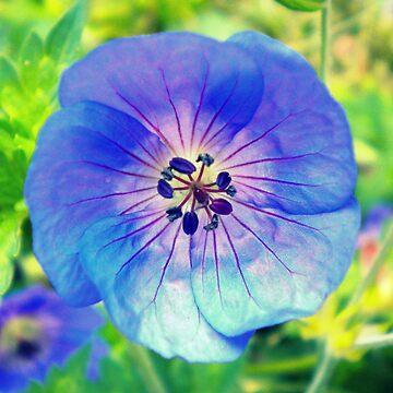 Purple Flower by EvelynR
