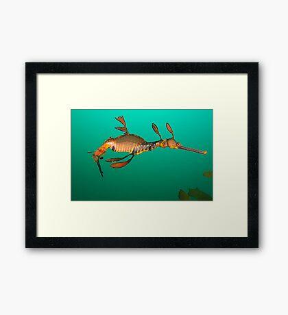 Bicheno Dragon Framed Print
