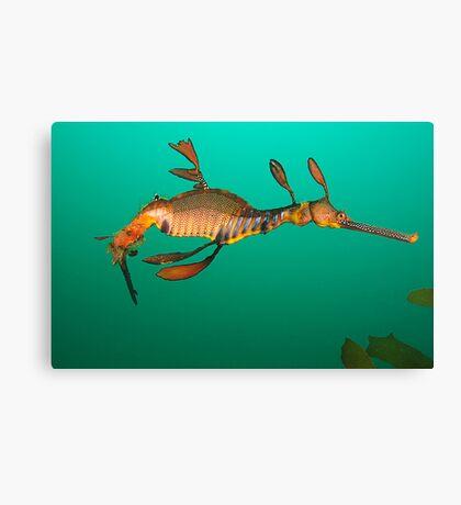 Bicheno Dragon Canvas Print