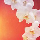 Orange Orchid by Deborah McGrath