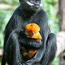 Francios Langur and Baby. by Sheila Smith