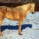 North Norfolk Horse by newbeltane