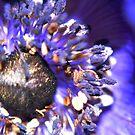 Deep in Blue by loz788
