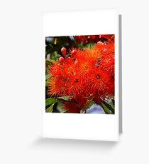 Flowering Gum Greeting Card